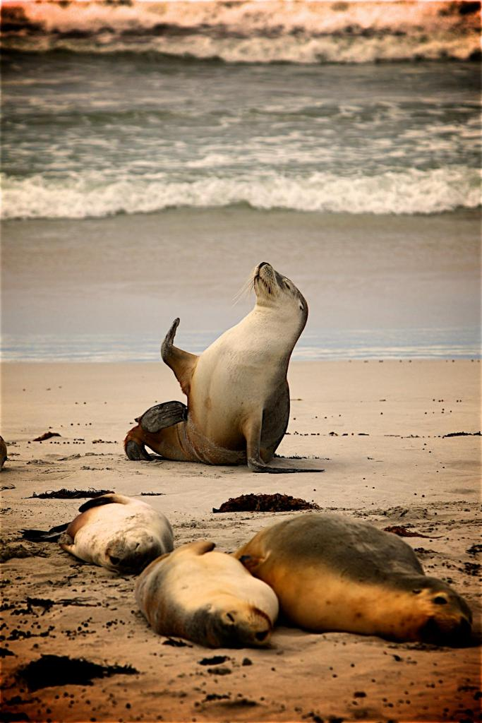 Sealion on seashore waving hello